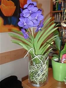 Orchidee Vanda Pflege : vanda im glas orchideenforum ~ Lizthompson.info Haus und Dekorationen