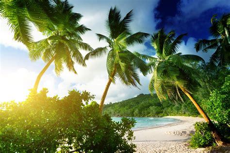 beach landscape palm trees wallpapers hd desktop