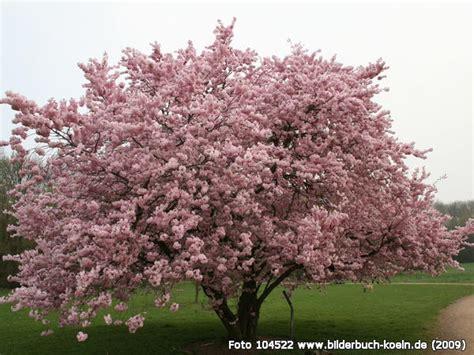 Forstbotanischer Garten Köln by Bilderbuch K 246 Ln Fr 252 Hlingserwachen