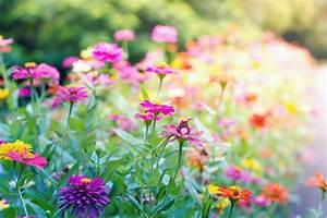 Nature Flowers Landscaping Landscape Garden Nature Plants ...
