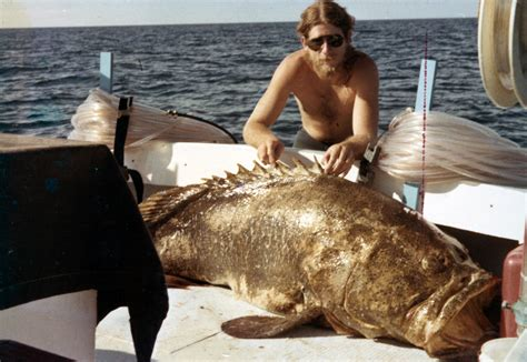 grouper goliath florida marquesas december don bear keys limits demaria officials tommy 1978 thomas taken collection grizzly say still harvesting