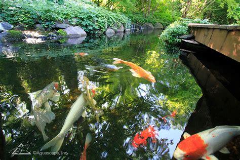 Aquascape Ecosystem by Water Garden Ecosystem Ponds Backyard Pond Designs