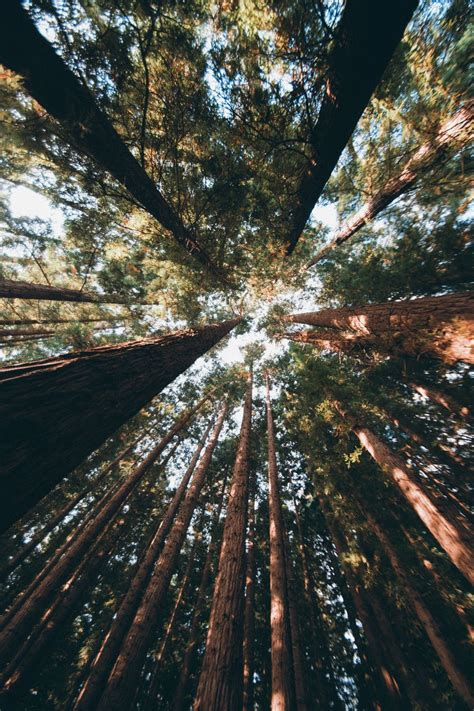 hullocolin: East Warburton Redwood Forest Australia