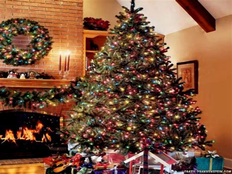 the best christmas trees τα ωραιοτερα χριστουγεννιατικα