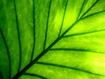 Plant Vista Nature Painting Desktop Chlorophyll Pretty
