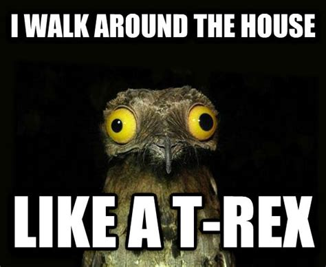 Crazy Bird Meme - potoo bird meme
