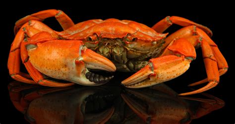Tighter Supplies Of Snow Crab And Higher Prices For All