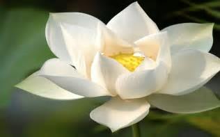Image result for hoa sen dep images