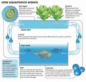 Is The Future Now With Aquaponic Grow Farms
