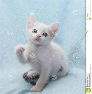 White Kitten With Green Eyes, Raise The Presser Foot Stock ...
