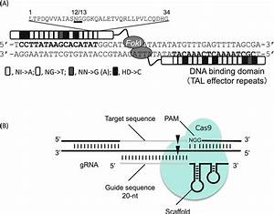 Targeted Mutagenesis In Rice Using Talens And The Crispr