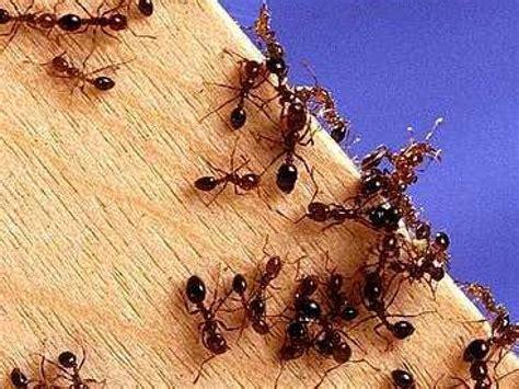 de moucherons dans maison segu maison