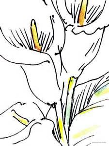 calla lilies calla pics cliparts co