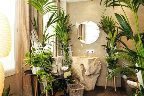 plante dans une chambre les plantes vertes dans la chambre annikapanika