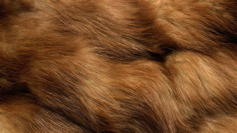 Faux Animal Skin Wallpaper - fur wallpaper wallpapersafari