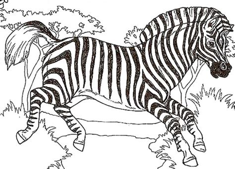 African Bird Coloring Book Zebra Page Kids Play Color