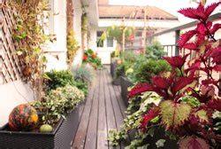 Nord West Ausrichtung Sonne by Nordbalkon Bepflanzen Pflanzen Pflegehinweise F 252 R Den