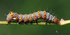 Multi Colored Caterpillar by natureguy on DeviantArt