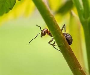 Gegen Ameisen Im Garten : ameisen hausmittel ~ Michelbontemps.com Haus und Dekorationen