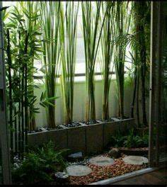 Zimmerpflanzen Fur Dunkle Ecken Zimmerpflanzen F R Dunkle Standorte