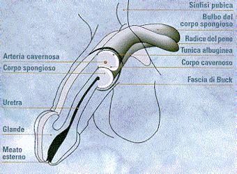 Ipertensione e disfunzione erettile
