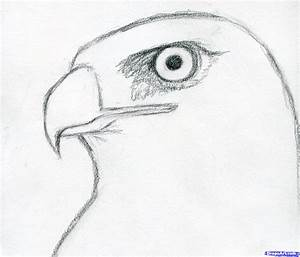 How to Draw a Hawk, Red-Tailed Hawk, Step by Step, Birds ...