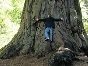 Big Basins Redwoods State Park - Picture of Big Basin ...