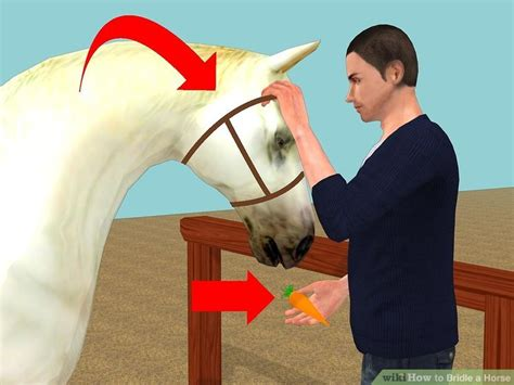horse bridle step wikihow halter nose band face