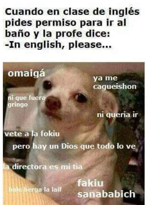Memes De Chihuahua - image gallery meme perro