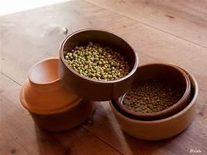 Comment Faire Germer Une Graine : faire germer des graines chez soi la petite fille de ~ Melissatoandfro.com Idées de Décoration