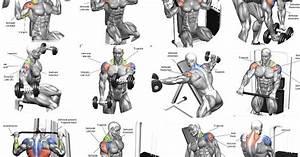 The 10 Best Shoulder Building Exercises For Bodybuilding Beginners