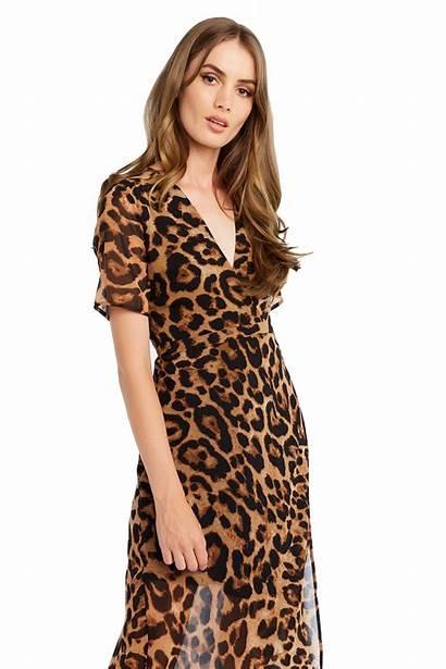 Leopard Wrap Clothing Bardot Dresses Night Ladies