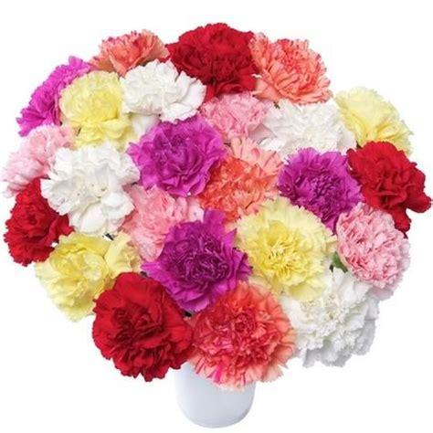 Fakta Menarik Bunga Anyelir Anyelir Bunga Toko bunga