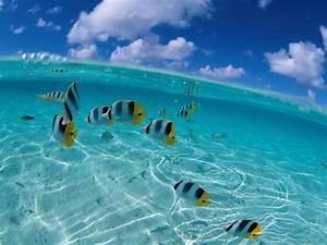 Fond Ecran Mer : fond d 39 ecran blue lagon wallpaper ~ Farleysfitness.com Idées de Décoration
