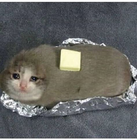 Crying Cat Meme - what s the origin of the crying cat pictures and why am i seeing them all over now outoftheloop