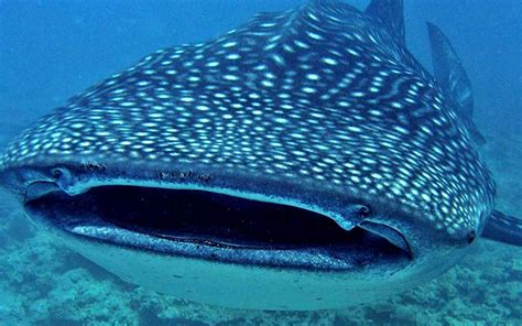 Bid Fish Environmental Sustainability The Big Fish Network South