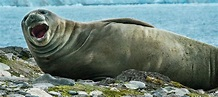 Sound review finds some marine mammals really feel the ...