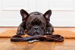 Hundehaltung Mietwohnung 2017 : hundehaltung in der mietwohnung darauf kommt es an ~ Lizthompson.info Haus und Dekorationen