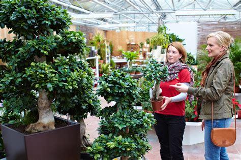 Diese Zimmerpflanzen Gedeihen Auch Ohne Grüne Daumen