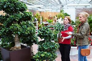 Robuste Zimmerpflanzen Groß : diese zimmerpflanzen gedeihen auch ohne gr ne daumen das gr ne medienhaus ~ Sanjose-hotels-ca.com Haus und Dekorationen