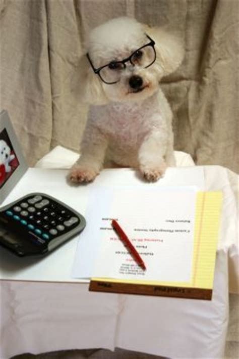 filing taxes dont forget  claim  foster dog