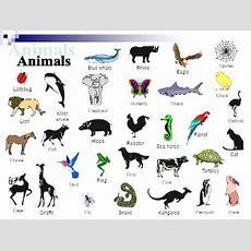 English Vocabulary Animals Youtube