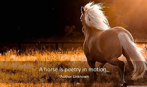 Horse Quotes  Famous Quotes & Quotations About Horses