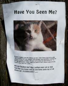 lost cat poster dahlia is missing the of otis