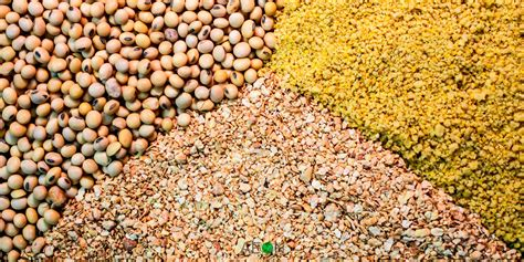 How To Start Livestock Feed Production In Nigeria Or