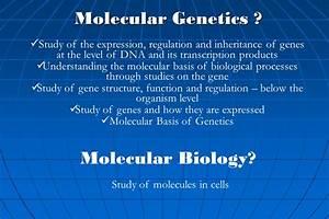 Plant Molecular Genetics