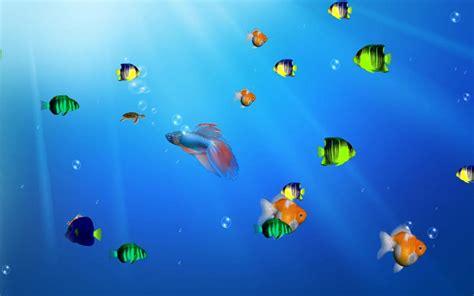 Free Aquarium Screensavers Hd July 2012