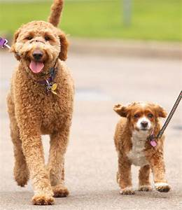 Moving in with another pet owner introduce pets for How to introduce a dog to a new dog