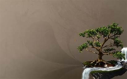 Bonsai Tree Wallpapers Taringa Wallpapersafari Desktop