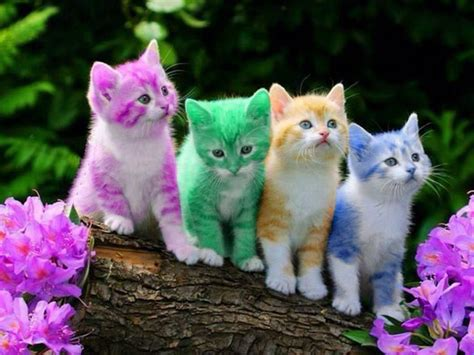 Awesome Multi Colourful Funny And Cute Cats